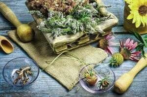 Травы для лечения кондилом