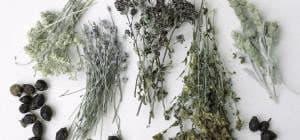 Травы при крапивнице
